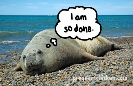 seal-labor